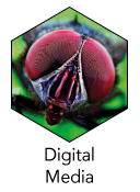 BTEC_Level_1_DigitalMedia_icon