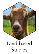 BTEC_Level_1_LandBased_icon