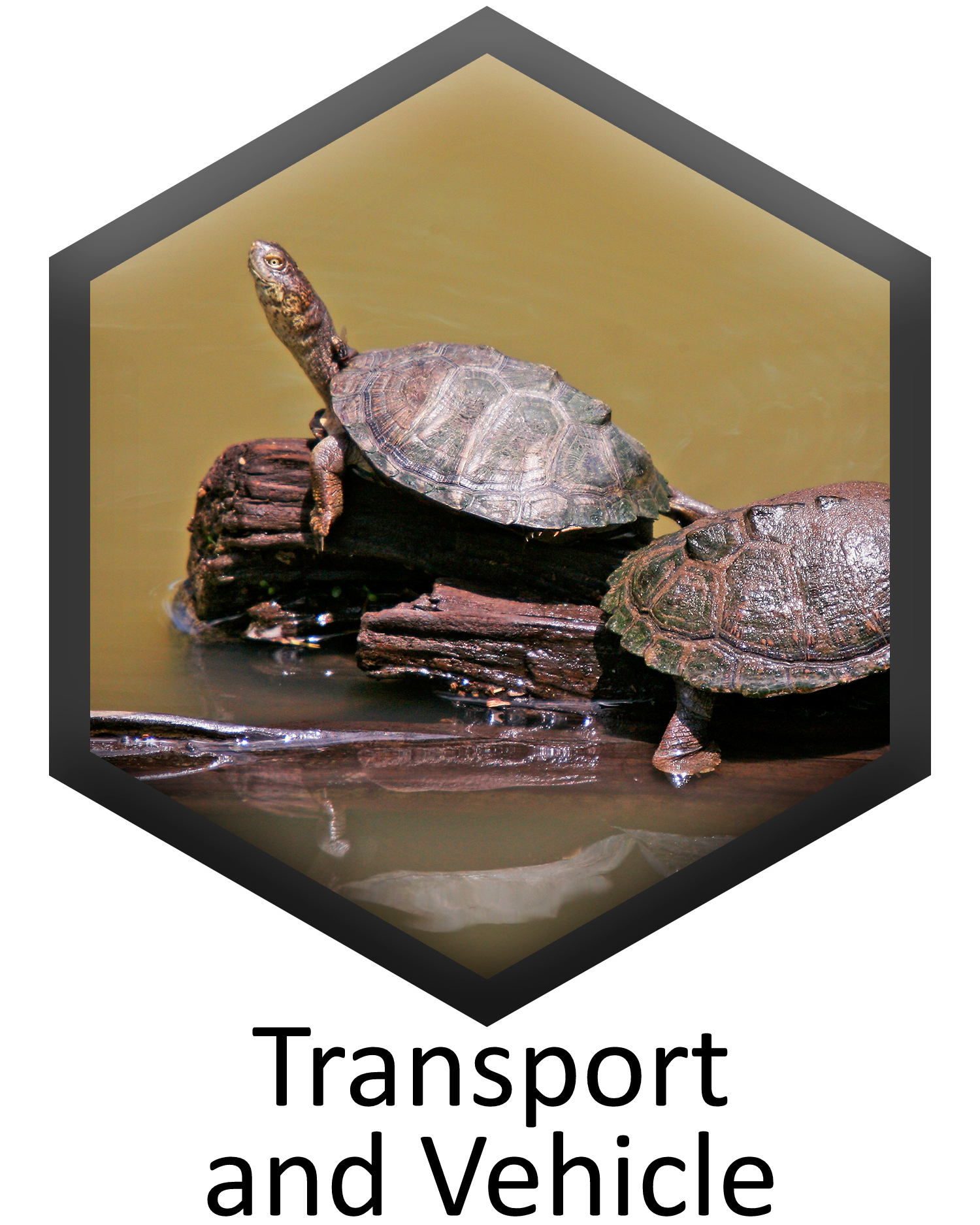 Transport and Vehicle specification