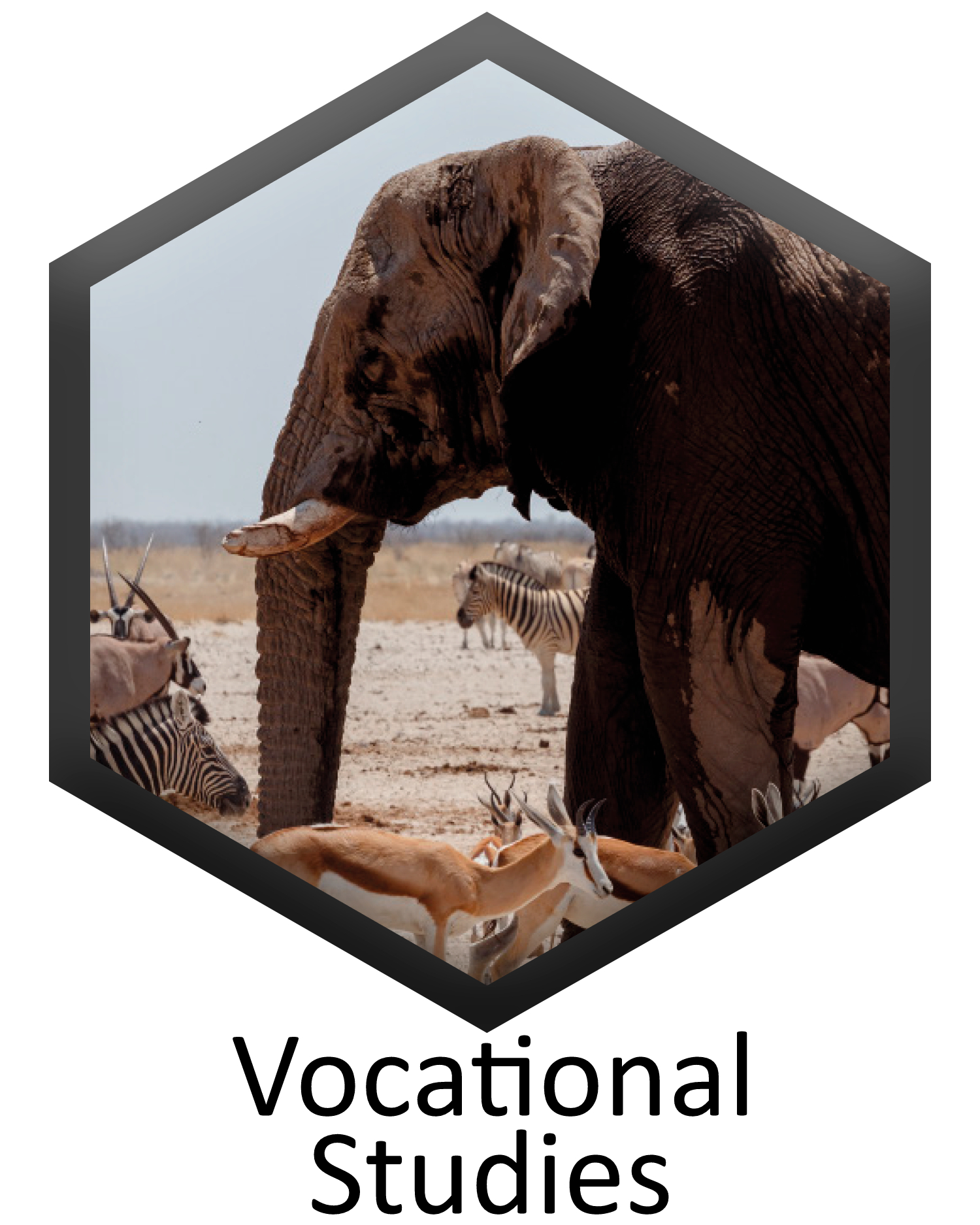 Vocatioonal Studies specification